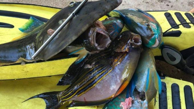 Des touristes chinois arrêtés pour avoir pêché au harpon dans une zone protégée