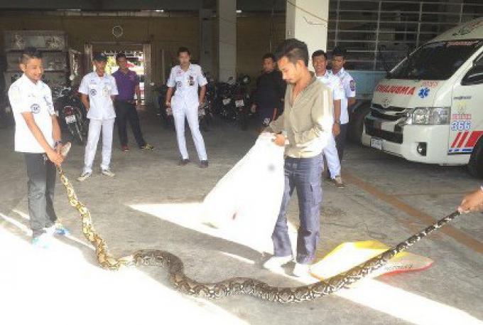 Les secouristes prennent un Python de 5 mètres