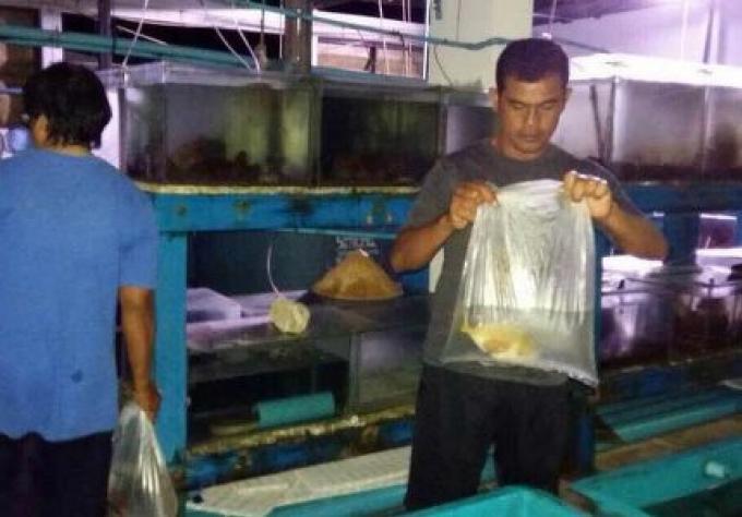 Un homme arrete pour contrebande de plus de 300 espèces de poissons rares