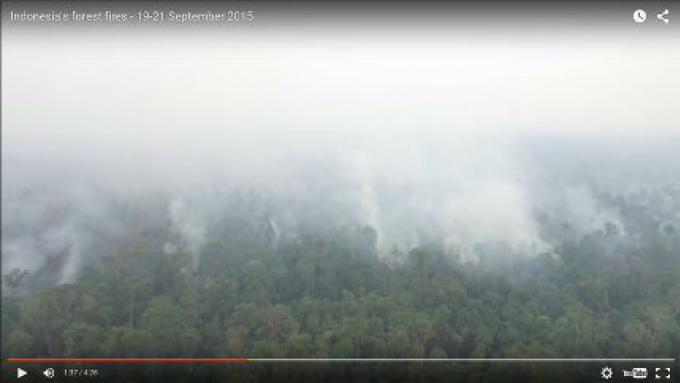 Greenpeace a publié de dramatique images vidéo prises par un drone montrant des forêts brûlant e
