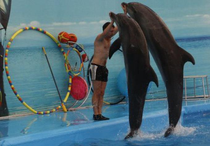 Les dauphins ne viennent pas de Taiji, dit Phuket GM